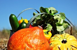 http://www.lafermedelasource.fr/273-thickbox_atch/petit-panier-de-legumes-de-saison.jpg