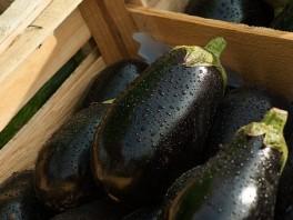 http://www.lafermedelasource.fr/380-thickbox_atch/aubergines-bio.jpg